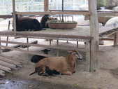 2013-02-05嘉義 獨角仙農場:獨角仙農場 038.JPG