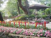 2013-02-07台南百花祭(台南公園):台南百花祭 043.JPG