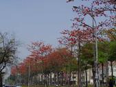 2012-03-22台南市 東豐路 木棉花:2012-03-22東豐路 木棉花 001.JPG