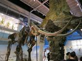 2013-02-10台南 新市 樹谷科學生活館:樹谷科學生活館 014.JPG