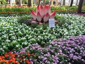 2012-02-29 2012台南百花祭:2012-02-29 2012台南百花祭 017.JPG