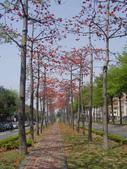 2012-03-22台南市 東豐路 木棉花:2012-03-22東豐路 木棉花 003.JPG