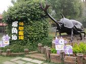 2013-02-05嘉義 獨角仙農場:獨角仙農場 015.JPG
