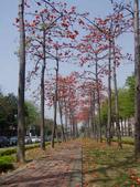 2012-03-22台南市 東豐路 木棉花:2012-03-22東豐路 木棉花 004.JPG