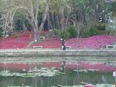 2013-02-07台南百花祭(台南公園):台南百花祭 064.JPG