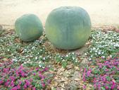 2013-02-07台南百花祭(台南公園):台南百花祭 033.JPG