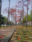 2012-03-22台南市 東豐路 木棉花:2012-03-22東豐路 木棉花 005.JPG