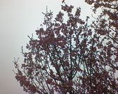 陽明山/花季/正:1787156461.jpg