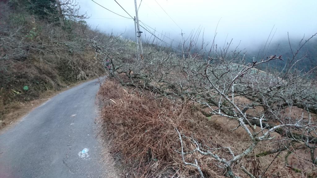 馬那邦山(錦雲山莊登山口):DSC_0692.JPG