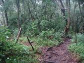 七星山的泥土步道100.11.29.~101.1.3.下午:DSC02018.JPG