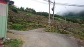 馬那邦山(錦雲山莊登山口):DSC_0386.JPG