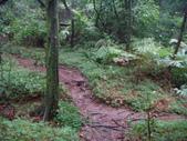 七星山的泥土步道100.11.29.~101.1.3.下午:DSC02019.JPG
