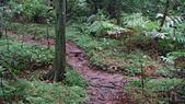 七星山的泥土步道100.11.29.~101.1.3.下午:DSC02020.JPG
