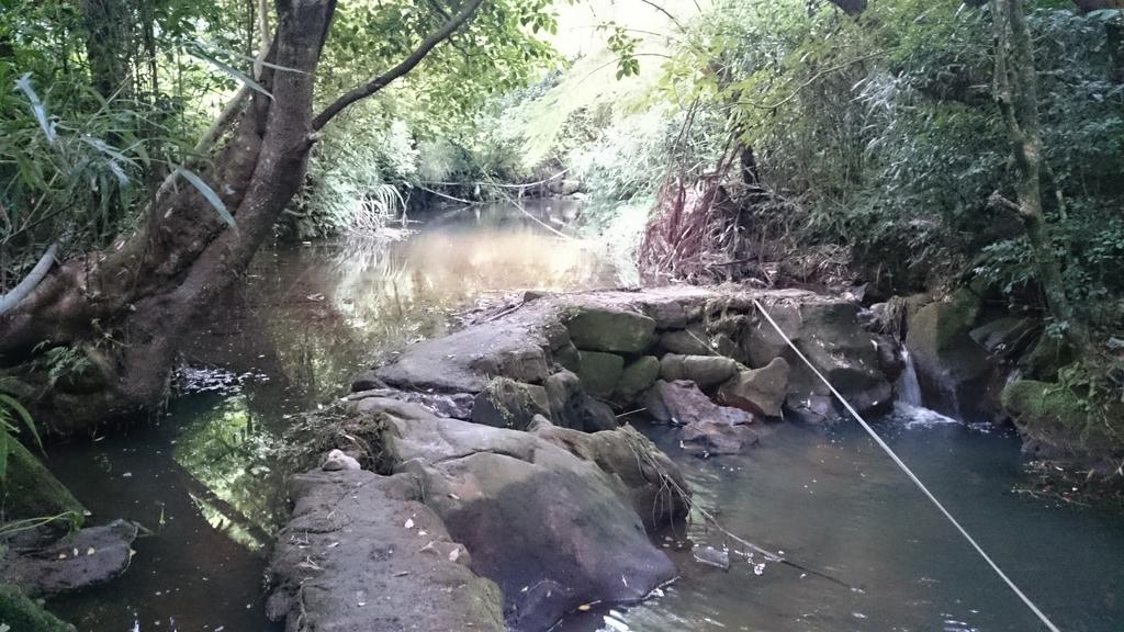 頂湖~水車寮步道~水尾山~二子坪親山步道:DSC_0270.JPG