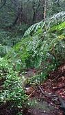 七星山的泥土步道100.11.29.~101.1.3.下午:DSC02021.JPG