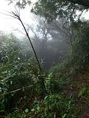 七星山的泥土步道100.11.29.~101.1.3.下午:DSC_0231.JPG