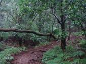 七星山的泥土步道100.11.29.~101.1.3.下午:DSC02023.JPG