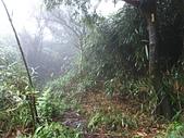 七星山的泥土步道100.11.29.~101.1.3.下午:DSC_0232.JPG