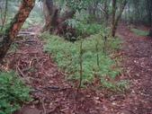 七星山的泥土步道100.11.29.~101.1.3.下午:DSC02024.JPG