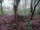 七星山的泥土步道100.11.29.~101.1.3.下午:DSC02025.JPG