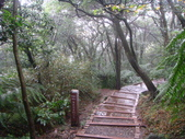 七星山的泥土步道100.11.29.~101.1.3.下午:DSC02027.JPG