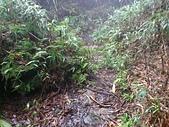 七星山的泥土步道100.11.29.~101.1.3.下午:DSC_0235.JPG