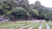 頂湖~水車寮步道~水尾山~二子坪親山步道:DSC_0224.JPG