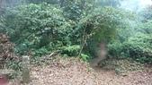 馬那邦山(錦雲山莊登山口):DSC_0465.JPG