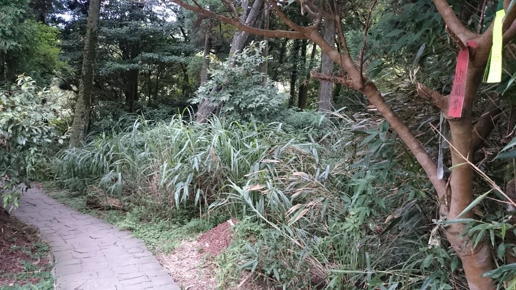 頂湖~水車寮步道~水尾山~二子坪親山步道:DSC_0225.JPG