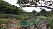 頂湖~水車寮步道~水尾山~二子坪親山步道:DSC_0234.JPG