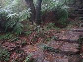 七星山的泥土步道100.11.29.~101.1.3.下午:DSC02038.JPG