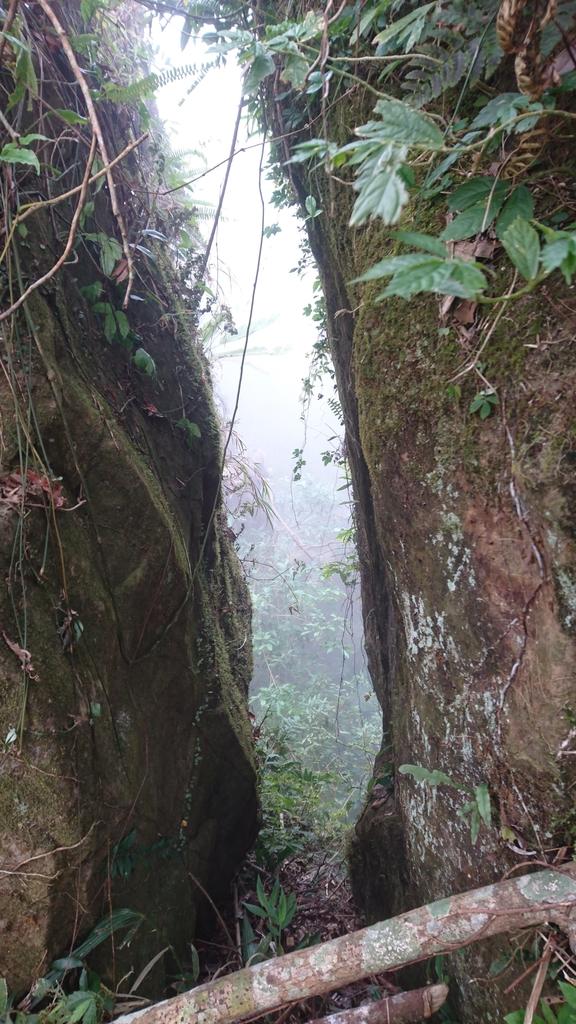 馬那邦山(錦雲山莊登山口):DSC_0677.JPG