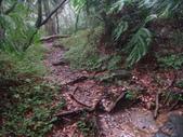 七星山的泥土步道100.11.29.~101.1.3.下午:DSC02039.JPG
