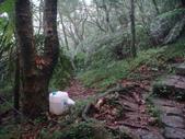 七星山的泥土步道100.11.29.~101.1.3.下午:DSC02040.JPG