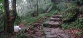 七星山的泥土步道100.11.29.~101.1.3.下午:DSC02040-41.JPG