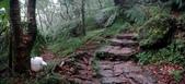 七星山的泥土步道100.11.29.~101.1.3.下午:DSC02040-41-S.jpg