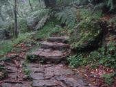 七星山的泥土步道100.11.29.~101.1.3.下午:DSC02041.JPG