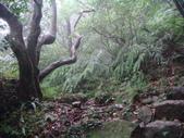 七星山的泥土步道100.11.29.~101.1.3.下午:DSC02043.JPG