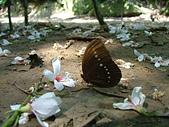 [新北市汐止區]汐止火車站:汐止翠湖桐花與蝶