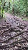 七星山的泥土步道100.11.29.~101.1.3.下午:DSC03203.JPG