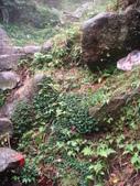 七星山的泥土步道100.11.29.~101.1.3.下午:DSC02048.JPG