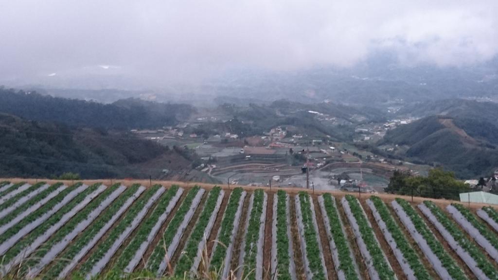 馬那邦山(錦雲山莊登山口):DSC_0696.JPG