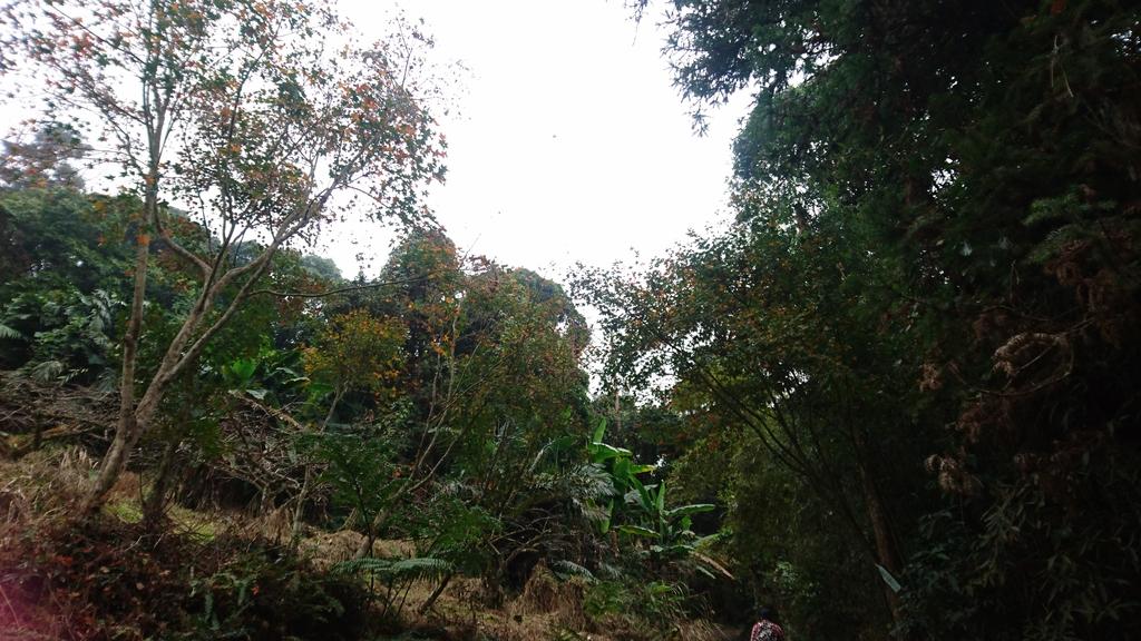 馬那邦山(錦雲山莊登山口):DSC_0394.JPG
