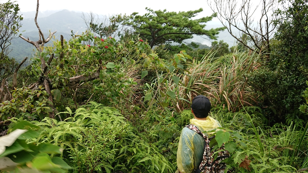 DSC_0441.JPG - 旅聯網十四周年版主登山活動