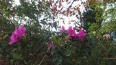 馬那邦山(錦雲山莊登山口):DSC_0656.JPG