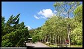 台東武陵外役監:樹形優美的行道樹回望