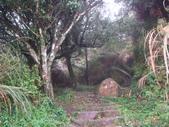 七星山的泥土步道100.11.29.~101.1.3.下午:DSC02056.JPG