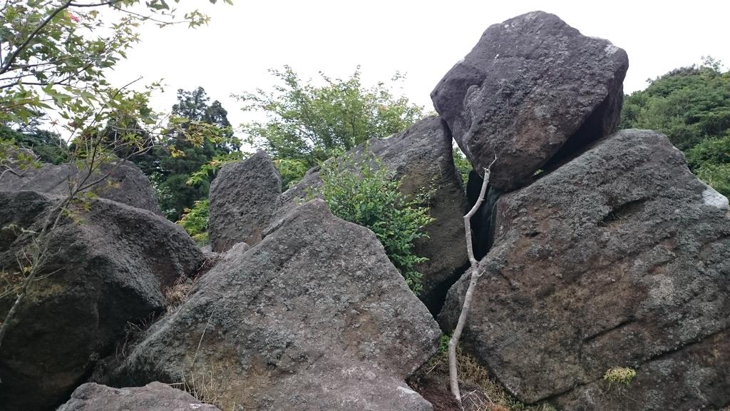 頂湖~水車寮步道~水尾山~二子坪親山步道:DSC_0286.JPG