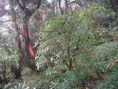 七星山的泥土步道100.11.29.~101.1.3.下午:DSC02057.JPG
