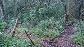 七星山的泥土步道100.11.29.~101.1.3.下午:DSC03218.JPG